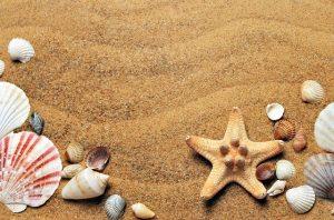 best beaches Sydney Cronulla