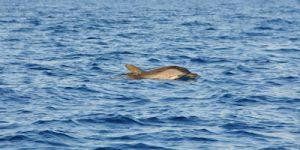 see dolphins at Bundeena