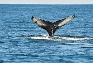 Cronulla whale watching cruises