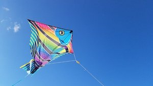 Kite flying in Cronulla