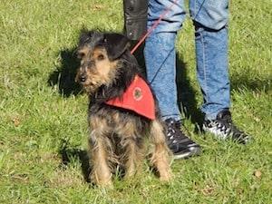 family dog show in Cronulla
