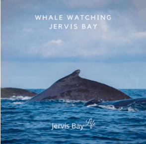 whale watching in Jervis Bay